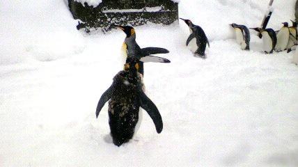 ペンギン①